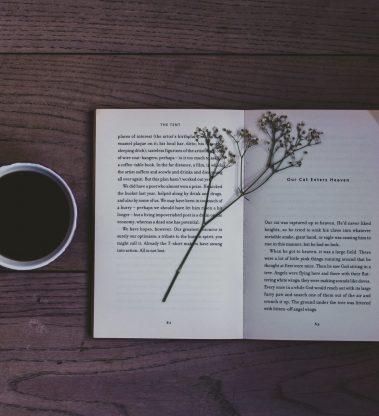 Métodos Narrativos para Terapeutas